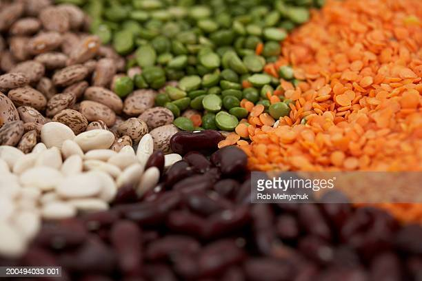 Assorted beans and lentils, elevated view