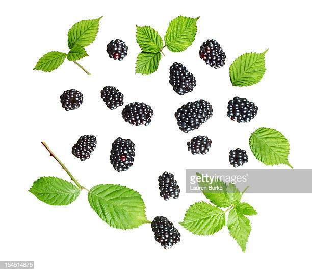 Assorted Blackberries and leaves