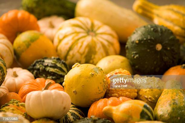 Assorted gourds, miniature pumpkins, and seasonal squashes