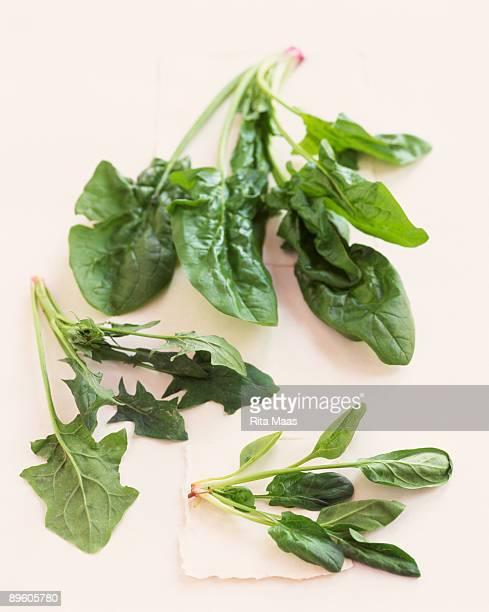 assorted greens - feuille de pissenlit photos et images de collection