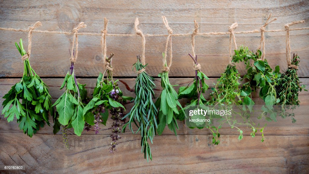 Assorted hanging herbs ,parsley ,oregano,mint,sage,rosemary,sweet basil,holy basil,  and thyme for seasoning concept on rustic old wooden background. : Stock Photo