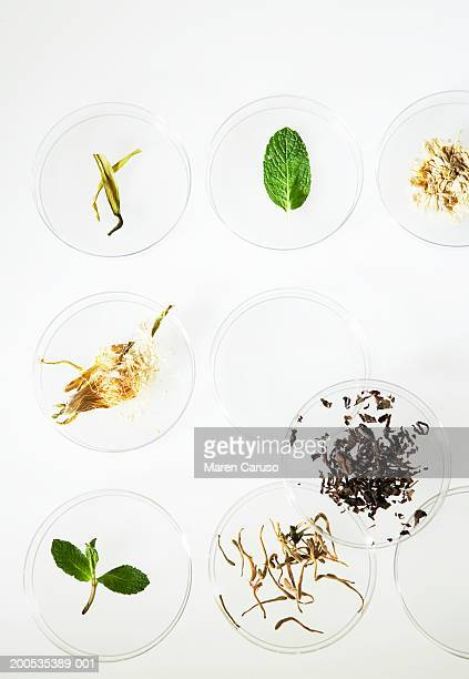 Assorted herbs in petri dishes, overhead view