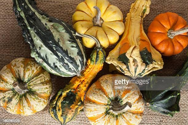 Assorted mini-pumpkins, still-life
