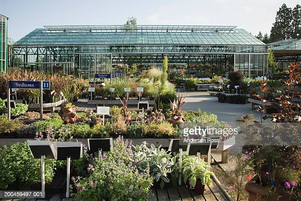 Assorted plants and trees at nursery, greenhouse in background