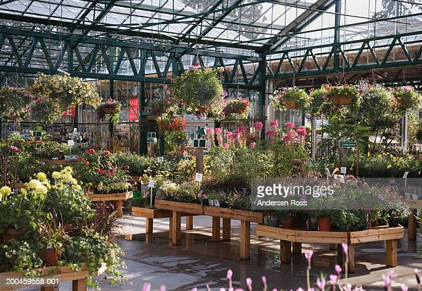 Assorted plants in plant nursery