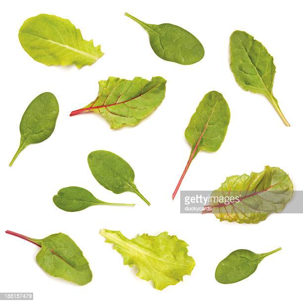 assorted salad leaf greens - lettuce stock pictures, royalty-free photos & images