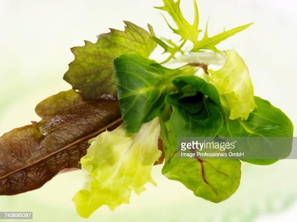 Assorted salad leaves
