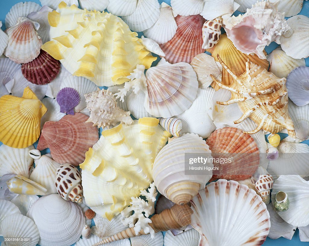 Assorted seashells, full frame : Stock Photo