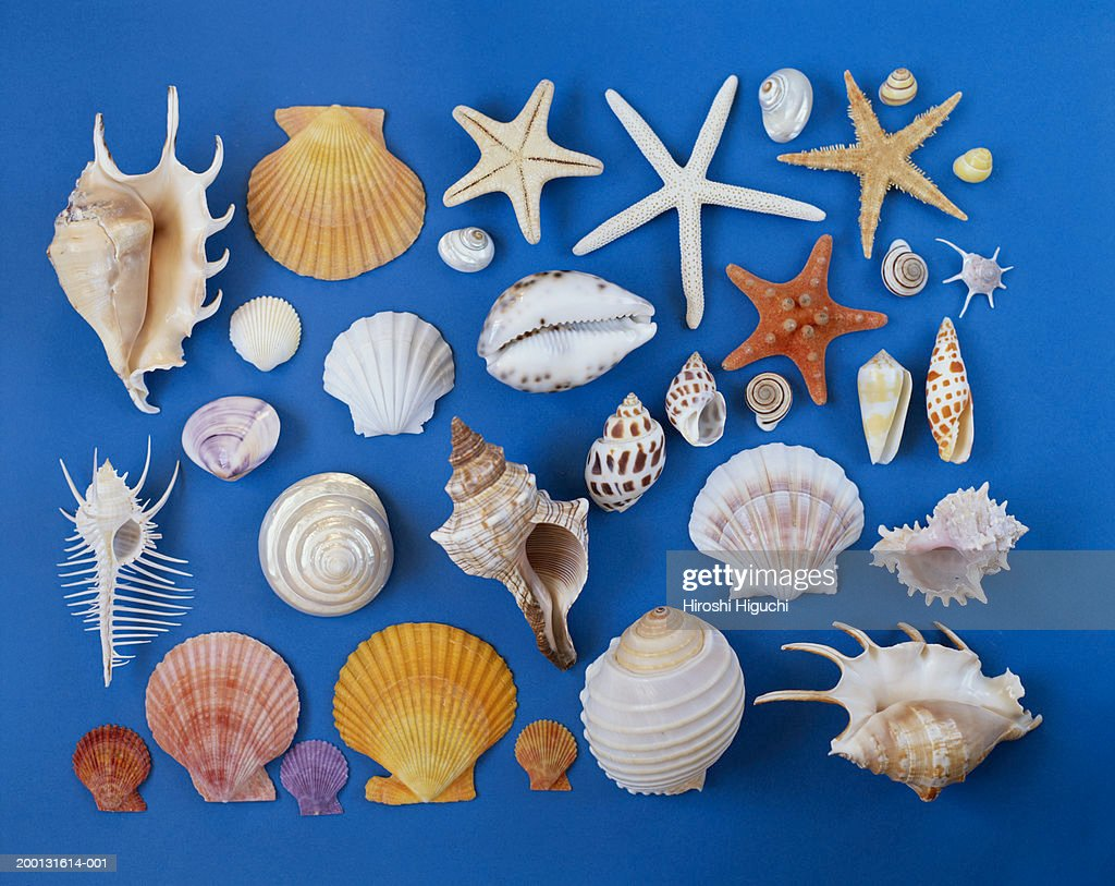 assorted seashells on blue background stock photo getty images