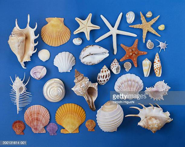 assorted seashells on blue background - seashell stock pictures, royalty-free photos & images