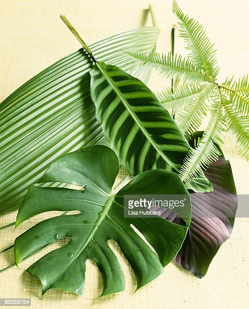 assorted tropical leaves - tropical bush stock pictures, royalty-free photos & images
