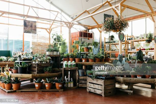assortment of cacti in a garden center - 植物園 ストックフォトと画像
