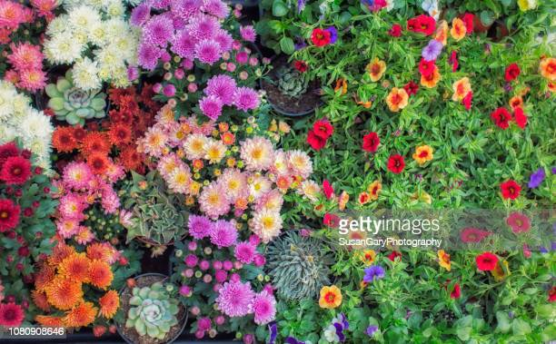 assortment of colorful flowers in wagon - flowerbed stock pictures, royalty-free photos & images