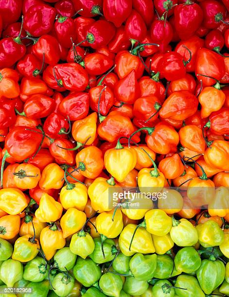 Assortment of Colorful Peppers
