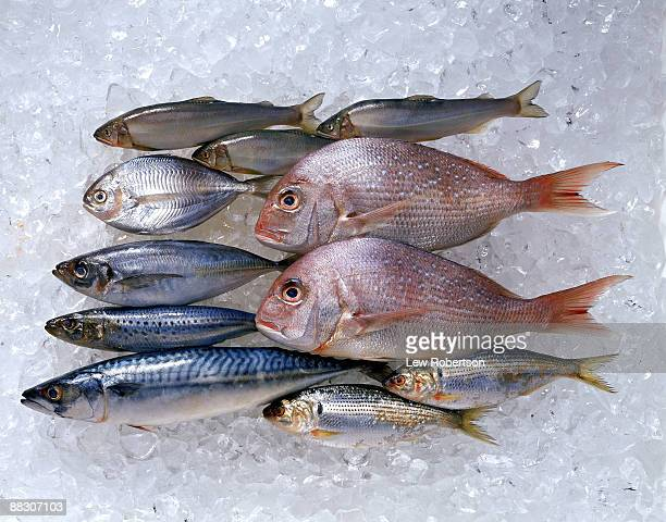 assortment of fish on ice - mackerel stock pictures, royalty-free photos & images