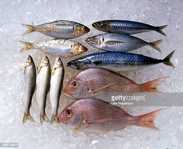 assortment of fish on ice - jack fish stock pictures, royalty-free photos & images