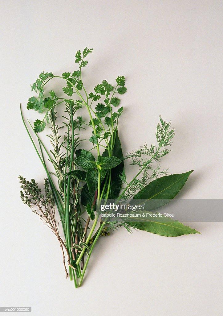 Assortment of fresh herbs : Stockfoto