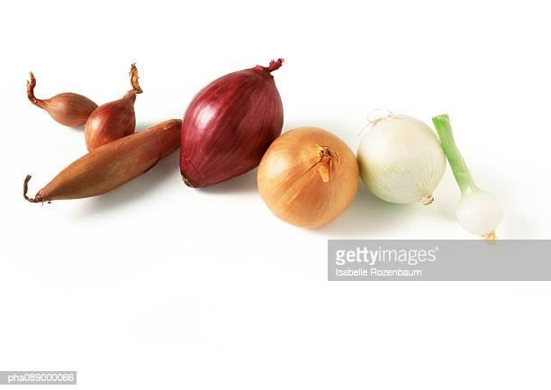 assortment of onions in a line - echalote fotografías e imágenes de stock