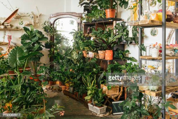 assortment of plants in a showroom - large group of objects stock pictures, royalty-free photos & images