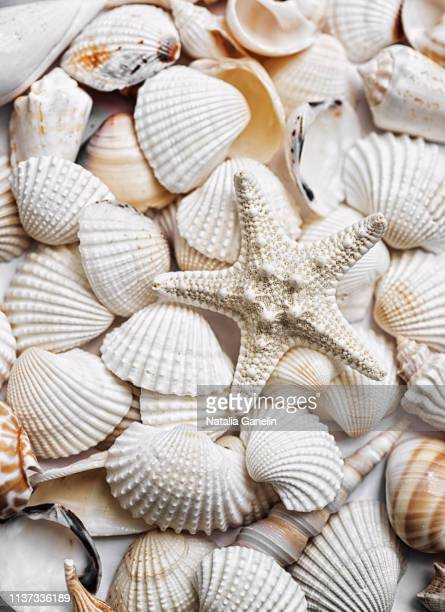 assortment of seashells - seashell stock pictures, royalty-free photos & images