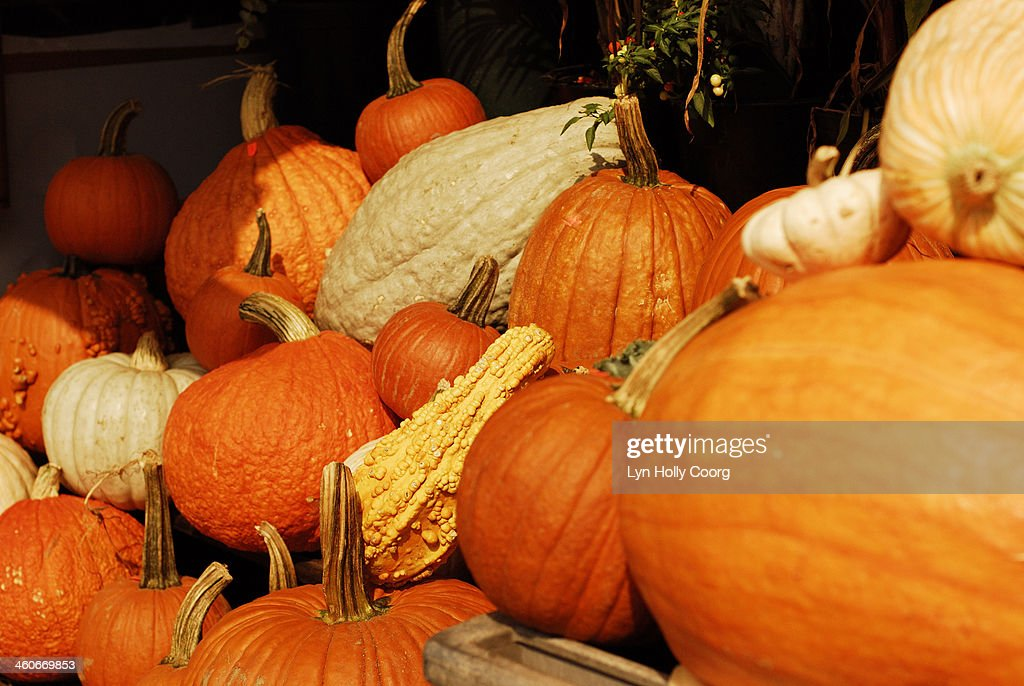 Assortment of winter squashes : Stock Photo