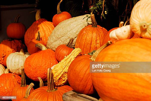 assortment of winter squashes - lyn holly coorg stock pictures, royalty-free photos & images