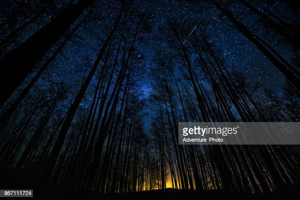 astro landscape tree silhouettes in forest milky way scenic - elysium stock photos and pictures