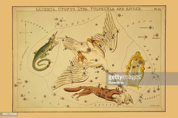 Astronomical chart showing a swan a lyre a lizard and a fox killing a goose forming the constellations