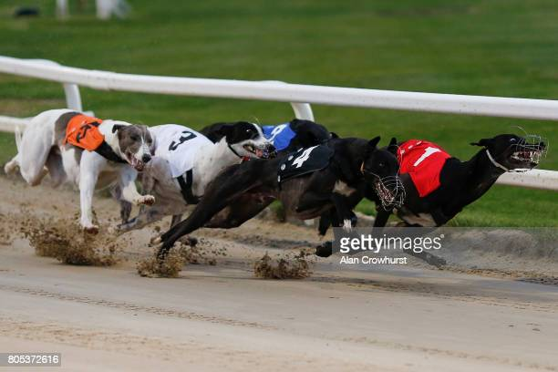 Astute Missile at the first bend before going on to win The Star Sports 2017 English Greyhound Derby Final at Towcester greyhound track on July 1,...