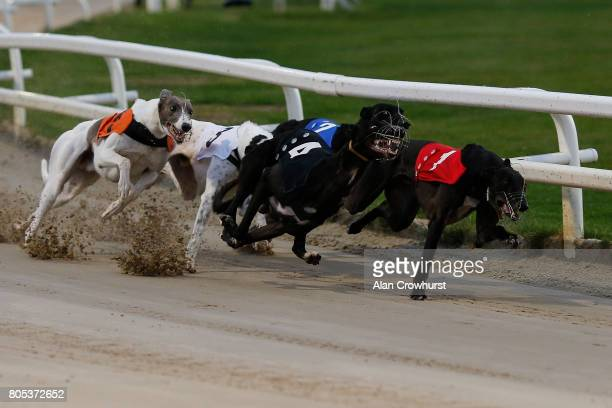 Astute Missile at the first bend before going on to win The Star Sports 2017 English Greyhound Derby Final at Towcester greyhound track on July 1...