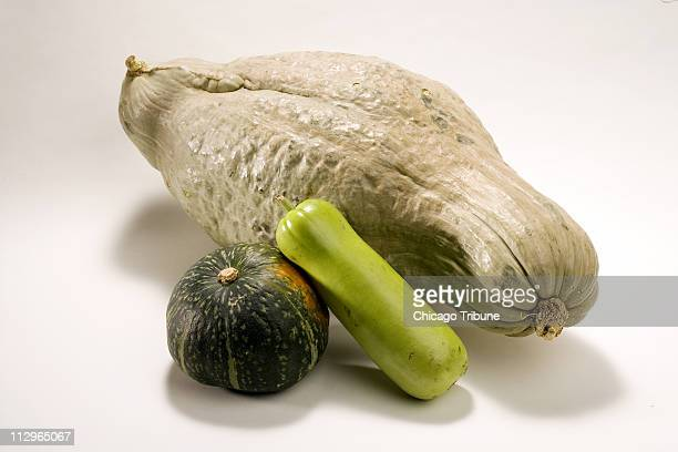 At 20 inches long and weighing 16 pounds this blue hubbard squash dwarfs the kabocha and opo squashes