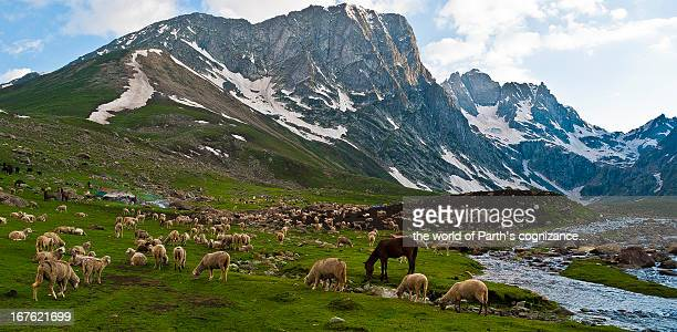 at a long deep valley walk... - kashmir stock photos and pictures