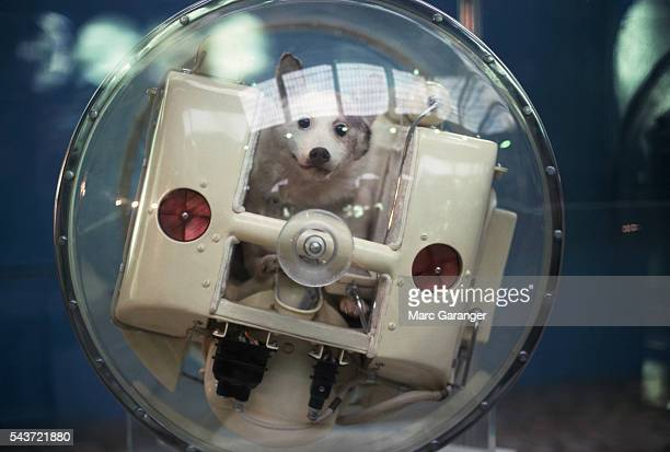 At an exhibition in the Pavilion of the Cosmos a dog named Laika peers from the airtight cabin of Sputnik 2 which was the second artificial satellite...