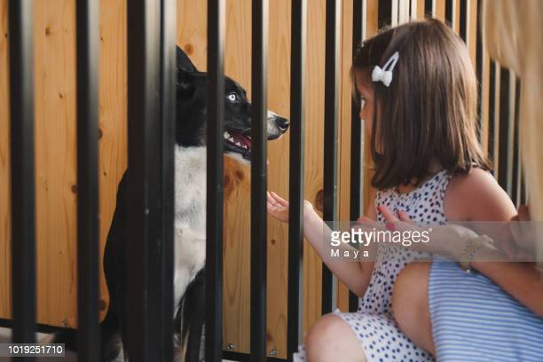 bij dierlijke adoptie centrum - adoptie stockfoto's en -beelden