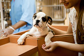 At animal adoption centre