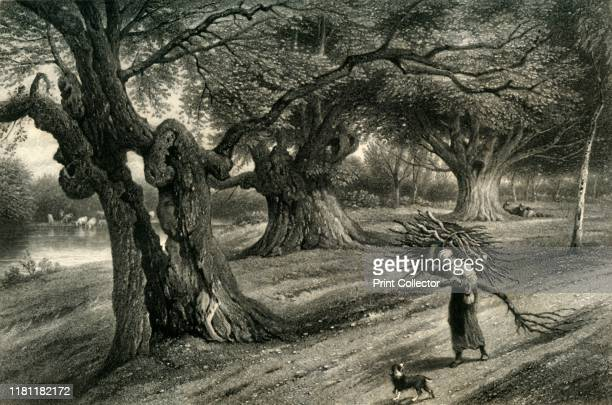 At Burnham Beeches' circa 1870 For centuries people gathered firewood from Burnham Beeches now a Site of Special Scientific Interest in Burnham...