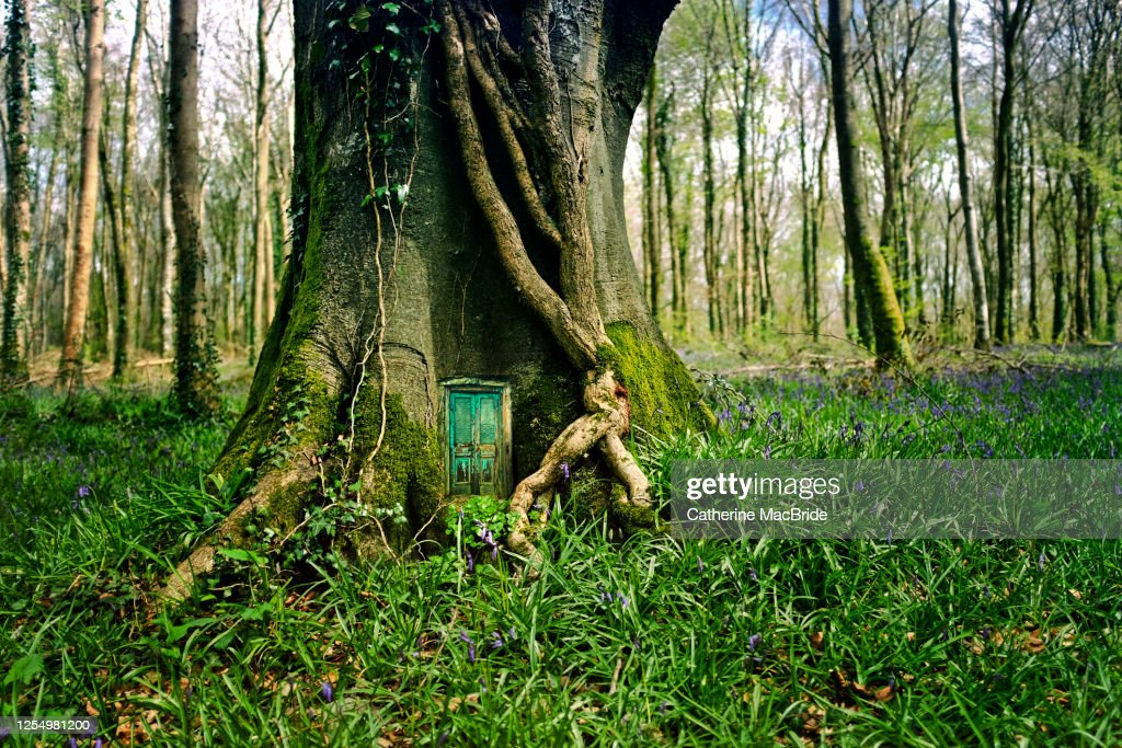 At home in the forest : Stock Photo