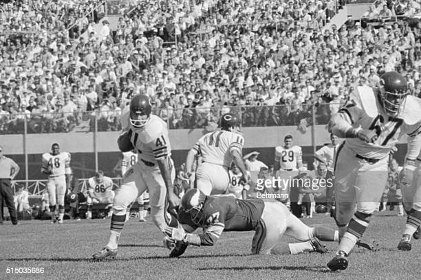 At Metropolitan Stadium Bears running back Brian Piccolo breaks Vikings defensive tackle Gary Larsen's tackle and scampers for 9yards after taking a...