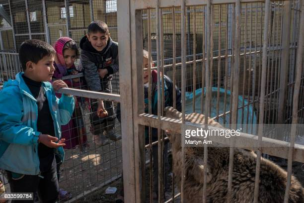 MOSUL IRAQ FEBRUARY 2 At Muntazr al Noor Zoo in east Mosul Iraq children visit the last bear left alive in the zoo on February 2 2017 The zoo's owner...