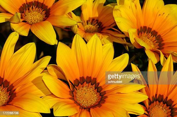 Mittags Blumen