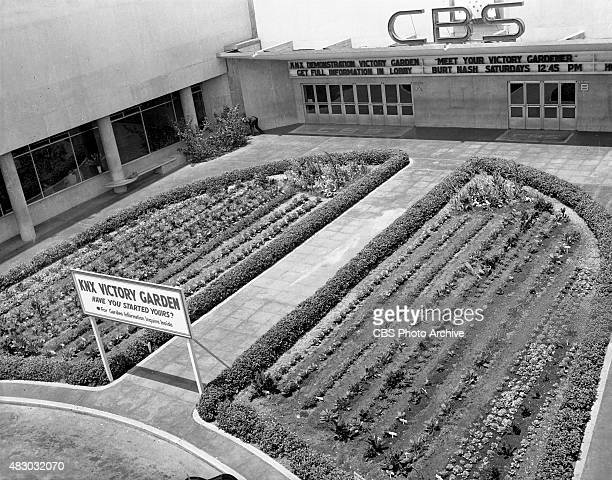At one time CBS workers could look out of their windows and watch a salad grow The victory garden in the forecourt was part of a national campaign to...