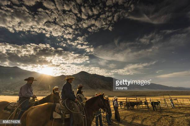 At sunrise, a group of cowboys and a cowgirl are ready to start their work day. Visible cattle in the background.