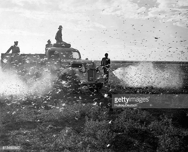 At sunrise the workers clamber of the trucks and use hand nozzles to direct the spray at the larger clusters of locusts