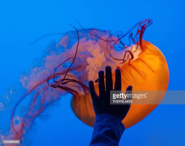 at the aquarium with jellyfish