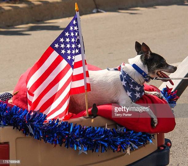 CONTENT] At the Arlington Texas 4th of July Parade a dog with a flag bandana in a wagon is part of the parade