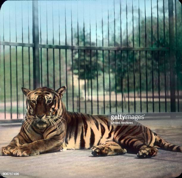 At the big cats' cage.