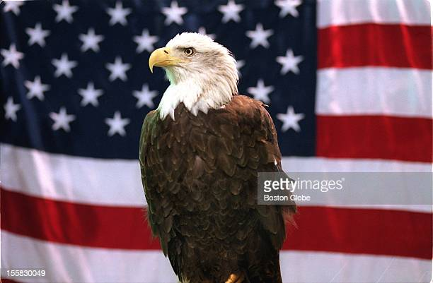 At the Boston Pet Expo at the Bayside Expo Center which runs through Sunday a real bald eagle sits on a perch in front of an American Flag