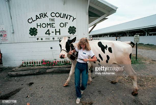 At the Clark County Ohio fair 16 year old country girl and 4H member Lori Soldner muscles her Grand Champion 4H dairy cow named 'Joy' around the...