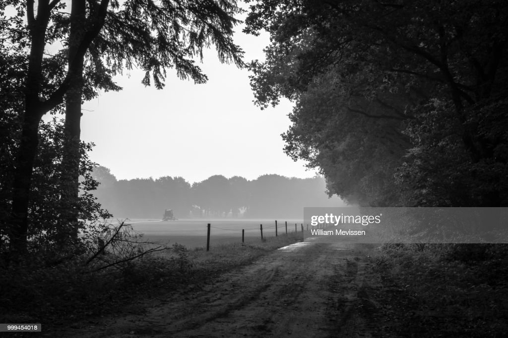 At The Edge Of The Forest : Stockfoto