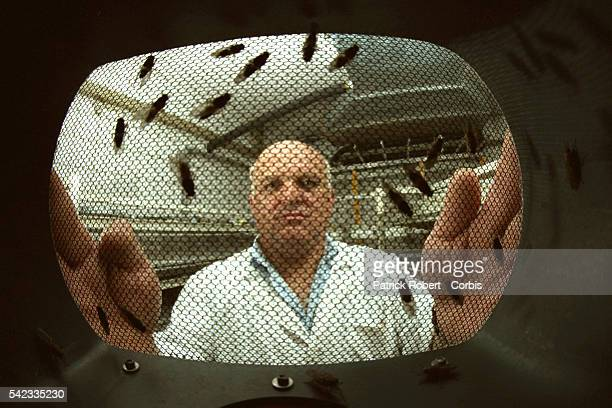At the IAEA laboratory a lab technician handles tsetse fly cages